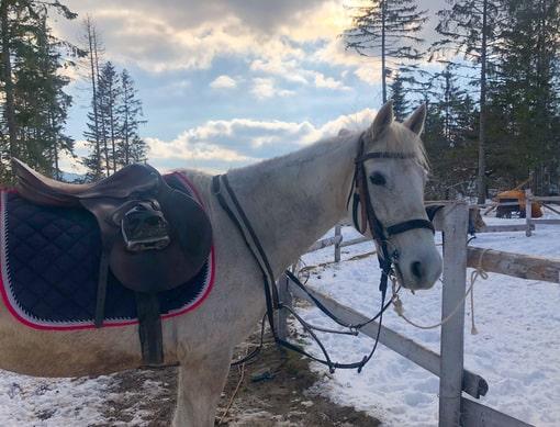 horse riding on tara
